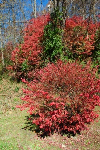 Burning bush excaping